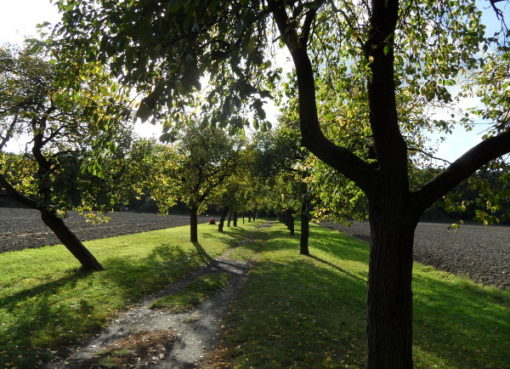 Volkspark Blankenfelde © visit pankow!