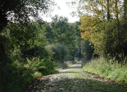 400 Jahre alter Waldweg durch die Schorfheide © Ralf Roletschek Marcela, GFDL
