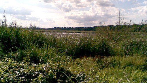 Die Moorlinse in Buch © visit pankow!